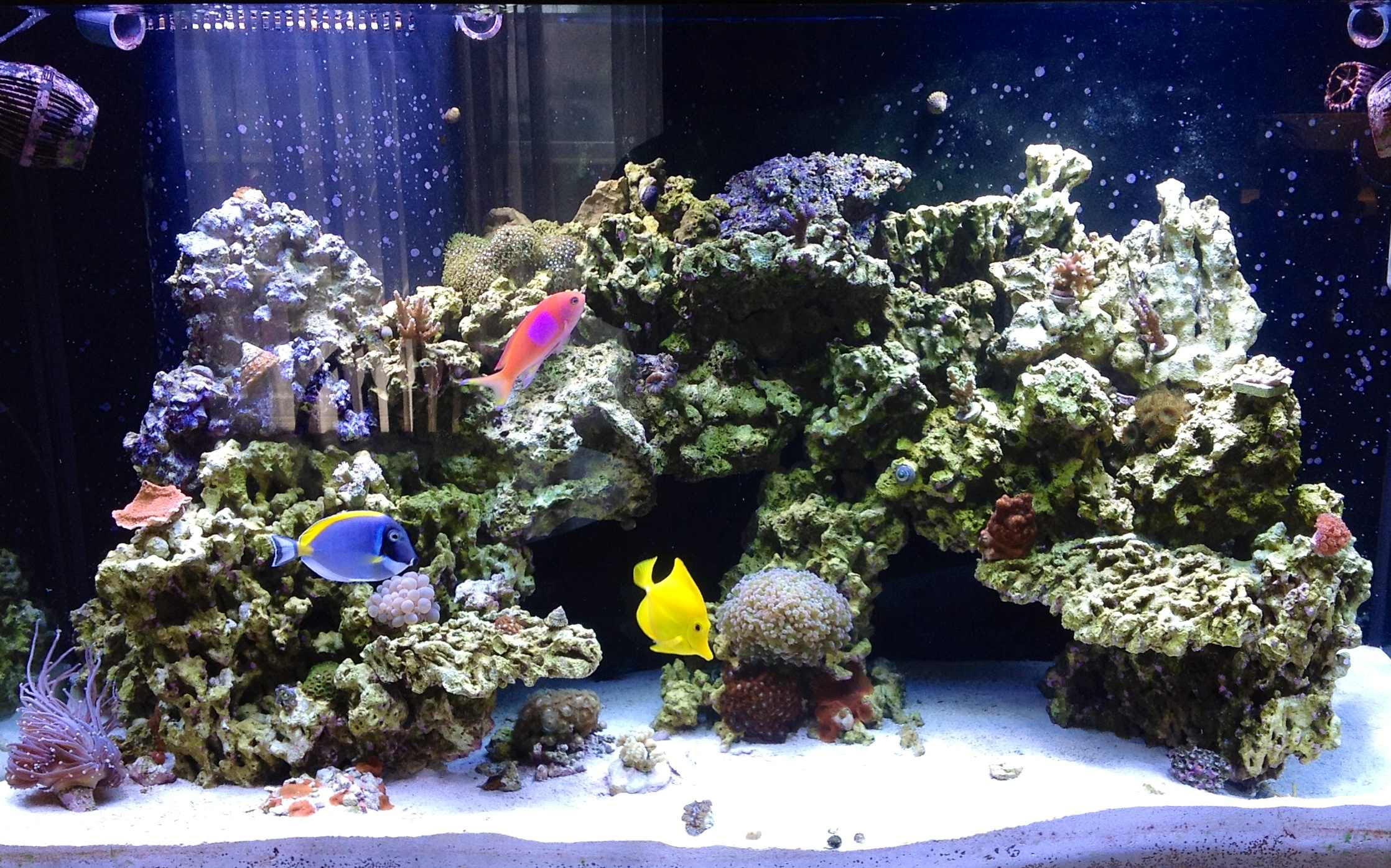 Aquascape Ideas Mixed Reef Aquascaping