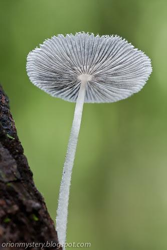 backlit fungus IMG_5951 stk copy