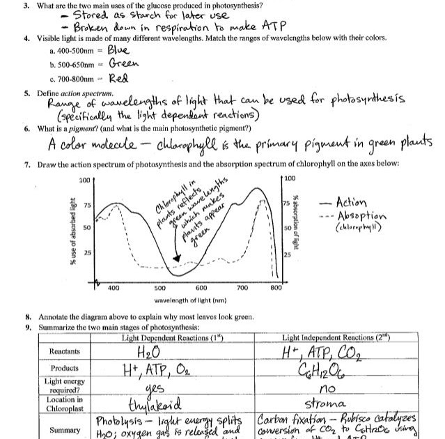 Photosynthesis Review Worksheet - worksheet