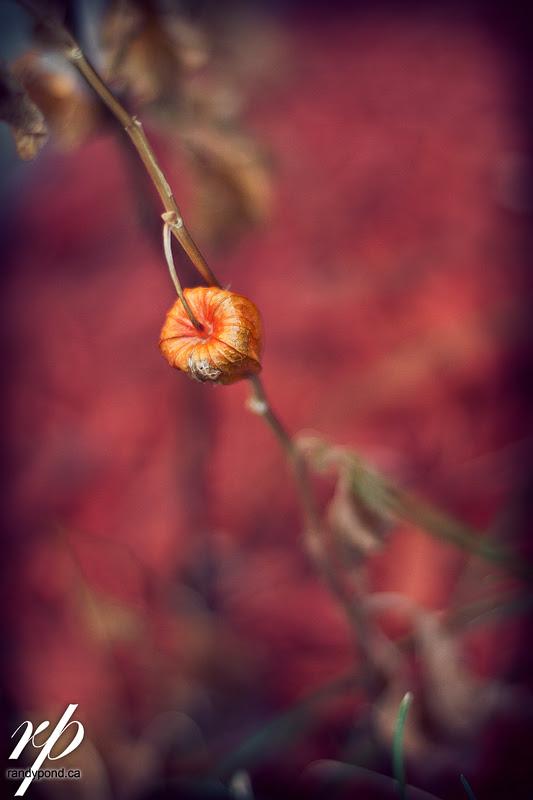 ~ 303/365 Fall ~