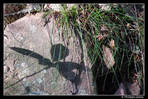 l'ombre de la Fée