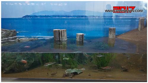 品川水族館35.jpg