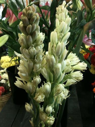 Tuberose in the Flower Shop by Ayala Moriel