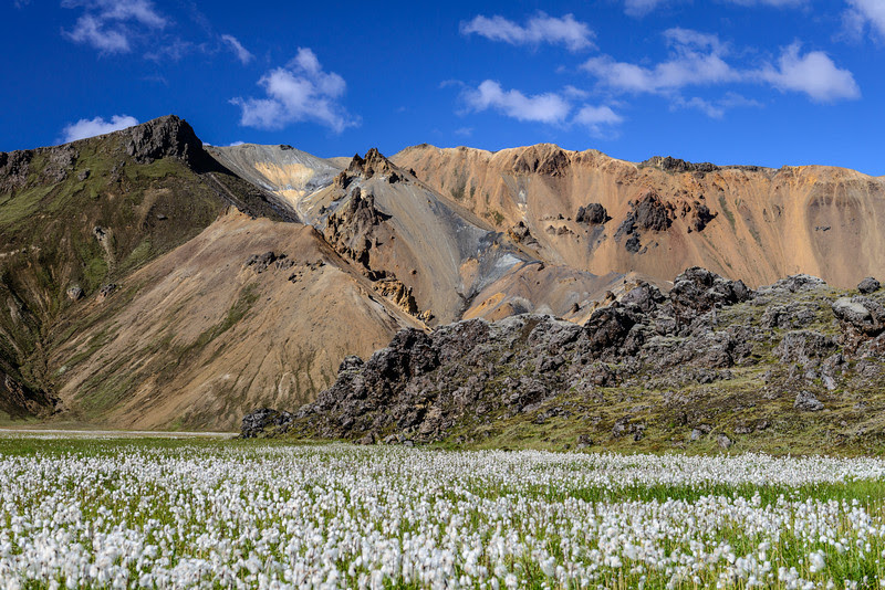 Cotton field Landmannalaugar