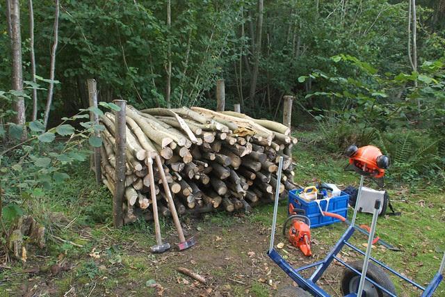 DSC_4969 logs stacked for seasoning