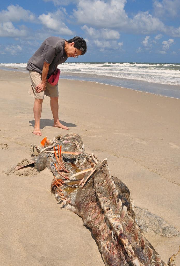 Carcass (5)