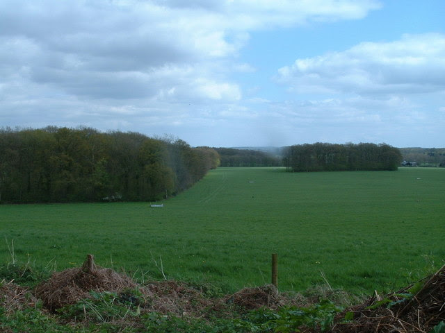 File:Snap of Snap Wood - geograph.org.uk - 163818.jpg