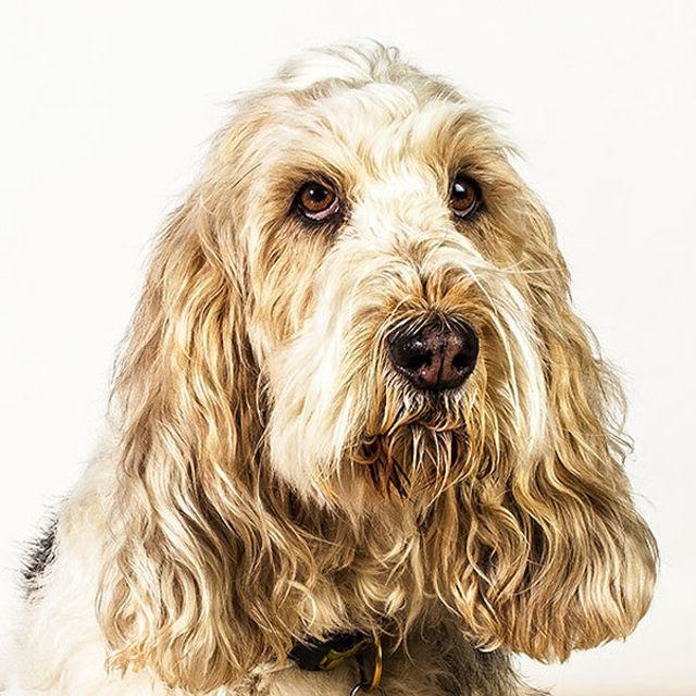 Retratos de cães cheios de personalidade 07