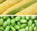 corn_and_soyabean.jpg