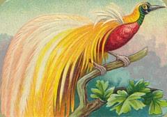 oiseauchromos 15