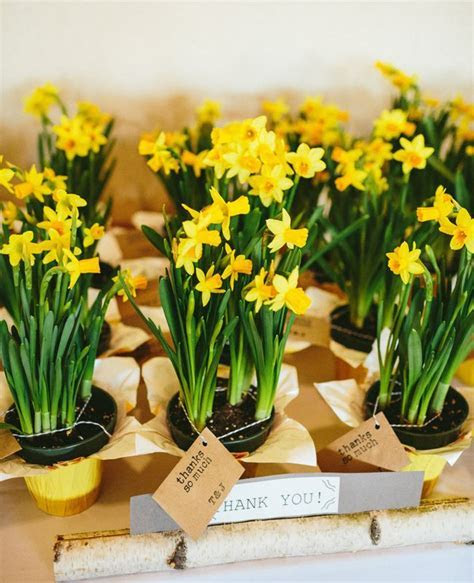 The Bloom of Spring In a Daffodil Wedding Theme