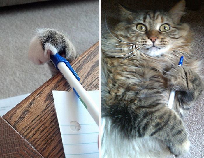 Pen Thief!