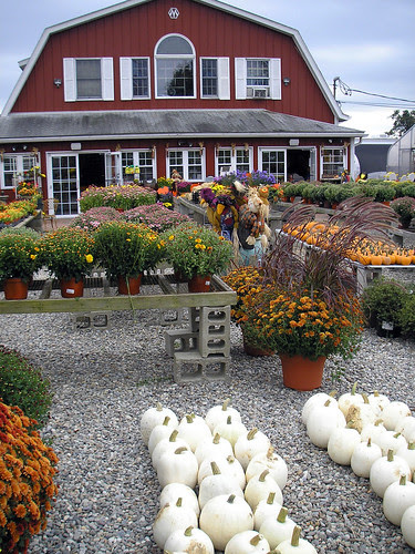 An October Farm Day! 4