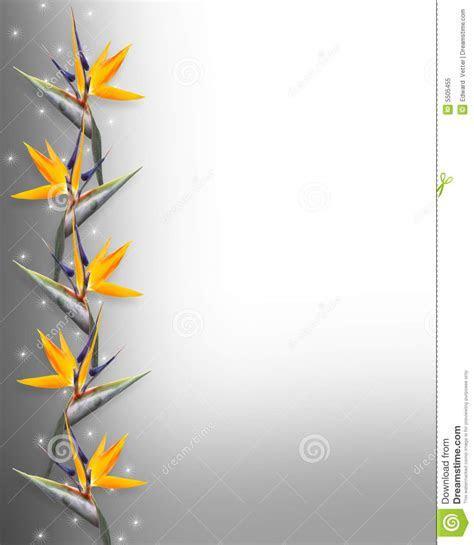 Floral Border Bird Of Paradise Strelitzia Stock
