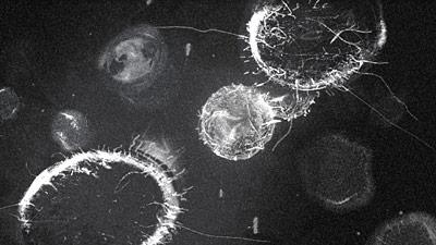 File:Virus Fusion 1.png