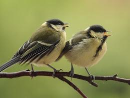 Quand-le-bruit-des-routes-oblige-les-oiseaux-a-adapter-leur-chant-72142.jpg