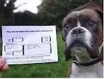 Charlie and his ballot