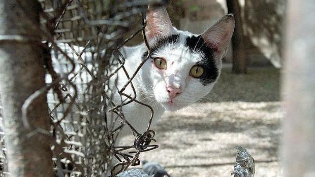 Los alimentadores de gatos tendrán que registrarse en el Ayuntamiento