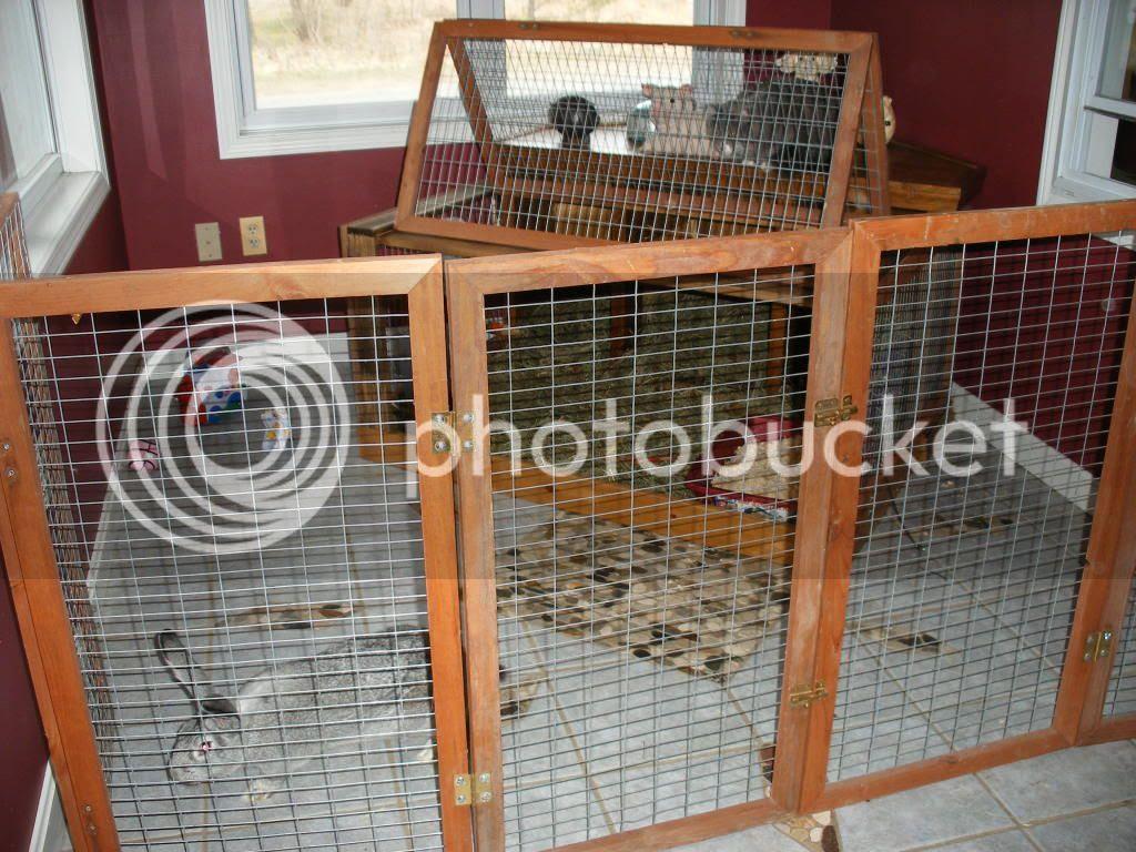 Flemish Giant Rabbit Cage - photo#10