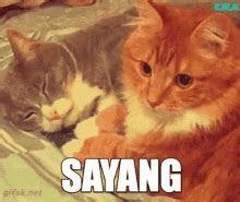 kucing nyanyi gif funny discover share gifs