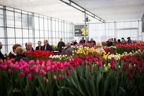 VWS Flowerbulbs at Tulip Trade Event