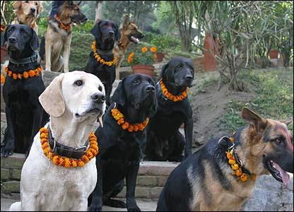 http://newsimg.bbc.co.uk/media/images/44227000/jpg/_44227089_dogs416.jpg