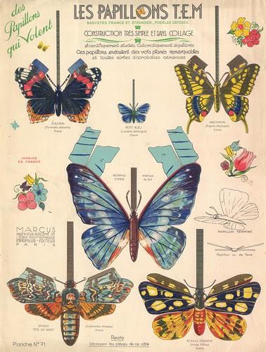 papillons tem  recto