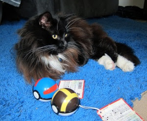 KoraCat-Pokeball-Curiosity