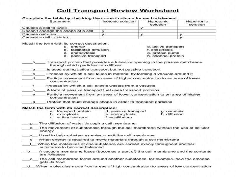 33 Homeostasis And Cell Transport Worksheet Answers ...