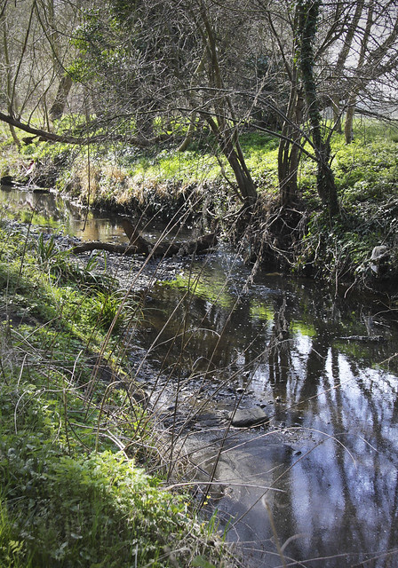 Hogsmill River near Tolworth