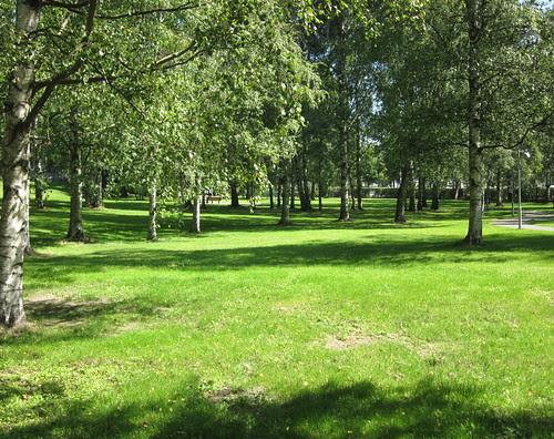 Puisto Koskelassa