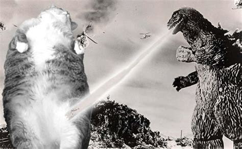 The Ultimate Battle! Godzilla Versus Cats!   Riot Daily