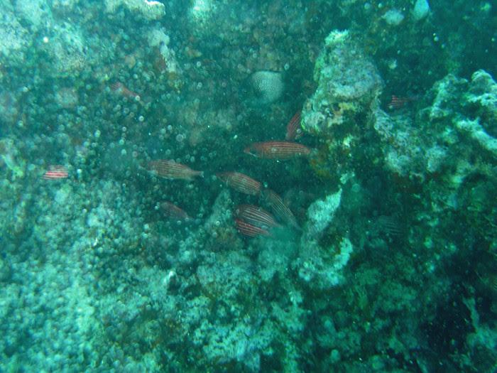 scuba diving oahu 141