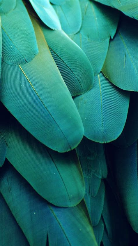 green leaves iphone  wallpaper idrop news