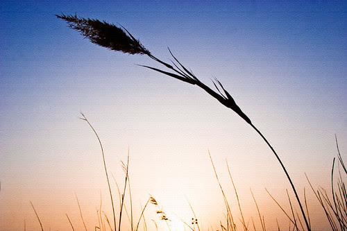 91.365_lake_sunset