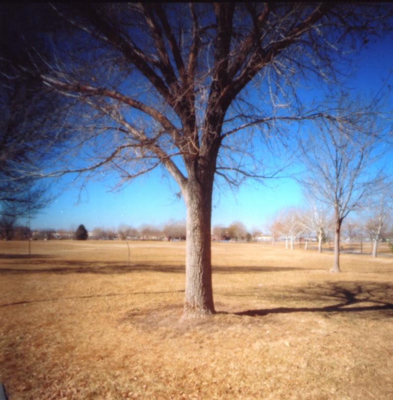 Tree002a
