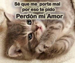 Imagenes De Lindos Gatitos Con La Frase Perdoname Mi Amor
