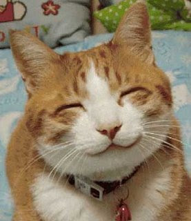 Download 87+  Gambar Muka Kucing Imut Terbaru Gratis