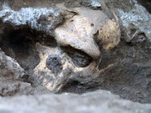 Cráneo hallado en Dmanisi