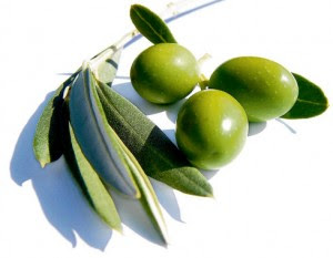 Can Olive Leaf Extract Cure High Blood Pressure Olives101com