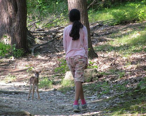 deer encounter