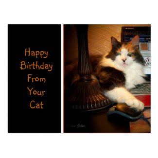 Happy Birthday From Your Cat Greeting Postcard Postcard