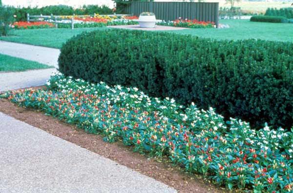 Garden Design Home