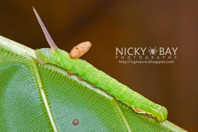 Caterpillar - DSC_7908