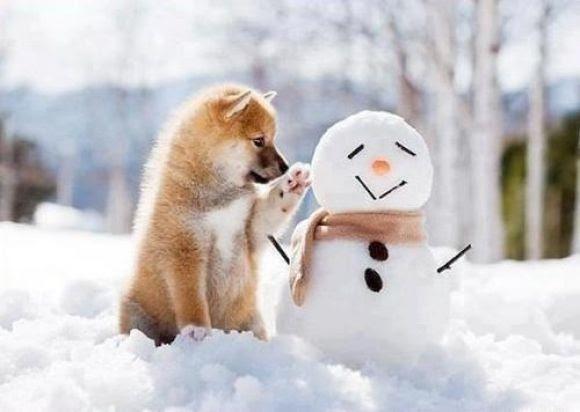 Hello little snowman