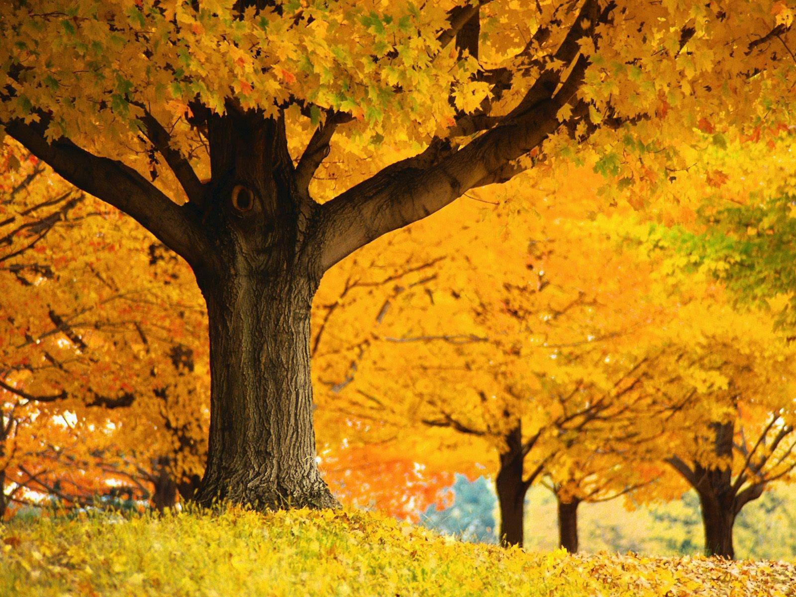 厚の秋の風景の壁紙 10 1600x1200 壁紙ダウンロード 厚の秋の風景