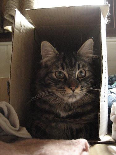 Gizmo in tha box