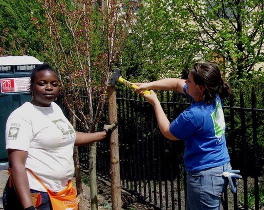 Tree Planting Driggs