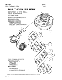 35 Dna The Blueprint Of Life Worksheet Answers - Worksheet ...
