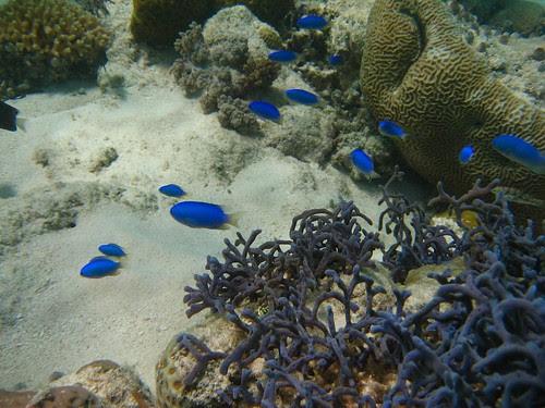 Ashmore reef 2